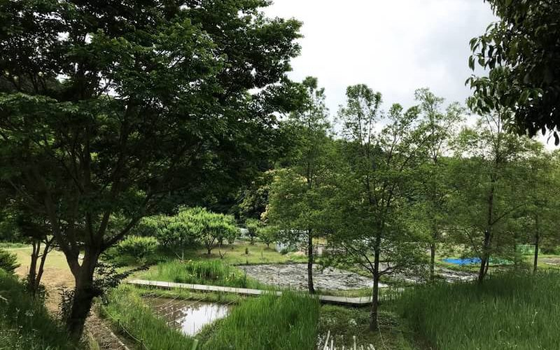 浜松市  ランニング  マラソン  ジョギング  散歩  健康体操